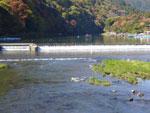 京都嵐山.jpg