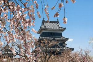 松本城桜.jpg