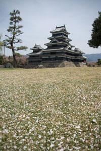 桜絨毯.jpg