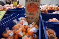渋柿.jpg